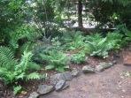 Shade Native Plants