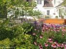 Native Garden Backyard