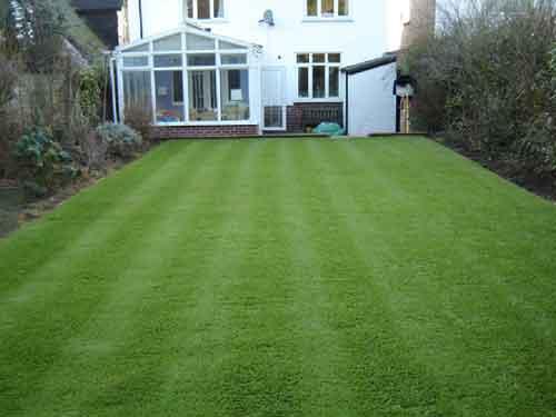 Monoculture Lawn