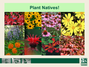 Plant Natives
